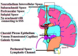 Theories of cerebrospinal fluid dynamics and hydrocephalus