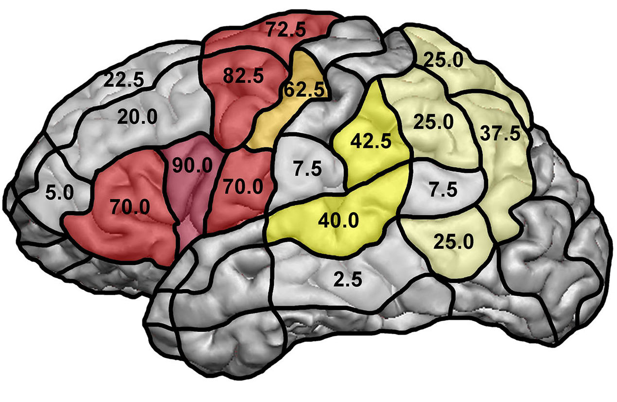 Mapping of cortical language function by functional magnetic resonance imaging and repetitive navigated transcranial magnetic stimulation in 40 healthy subjects